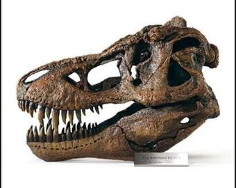 Tyrannosaurus Rex / T.rex (T-rex) Large Dinosaur Skull Model, 1:4 Scale