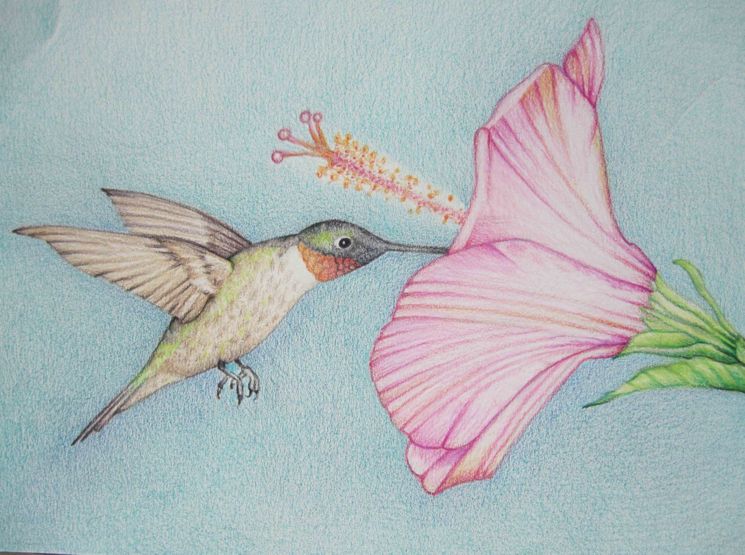 How To Draw Hummingbirds And Flowers