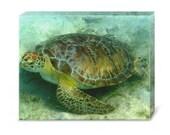 Green Sea Turtle - Original Underwater Photography - Beach - Nautical - Tropical - Caribbean - Ocean - Decor
