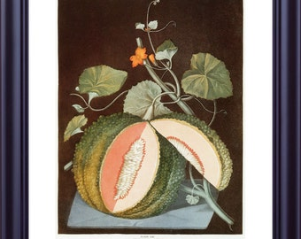 Large BOTANICAL Print 11x14 Vintage Kitchen Art Fruit Rock Melon George BROOKSHAW 1812 Dark Background Orange Green Vines LP0002