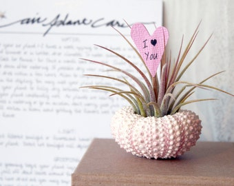 i love you // air plant garden