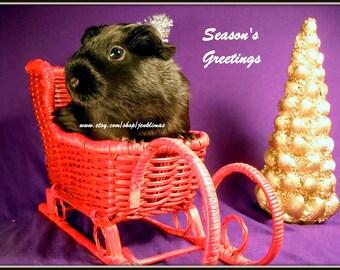 NAUGHTY or NICE Guinea Pig Christmas Magnets - 5 Piece Set