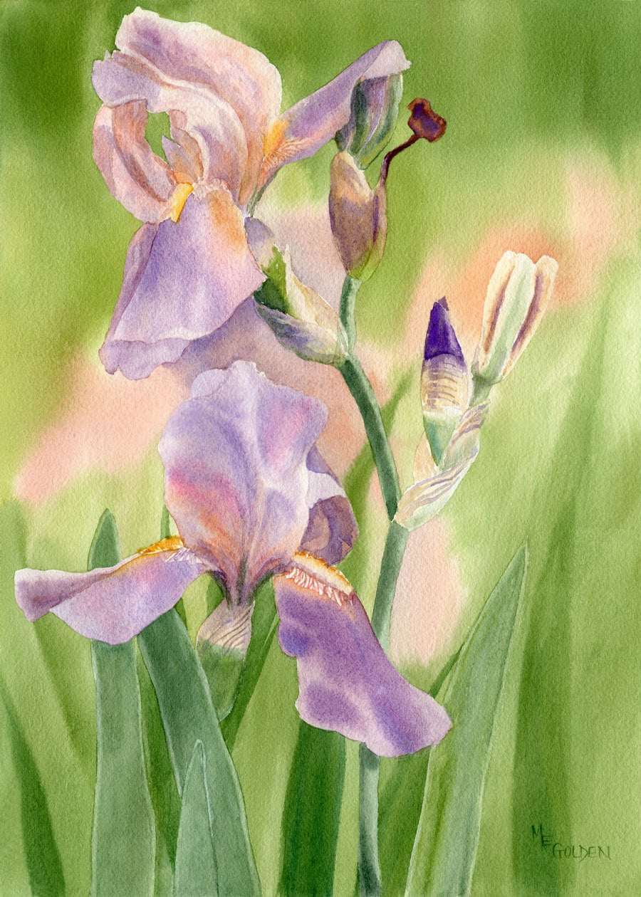 Colors of spring 2 giclee with iris in shades of peach and for Spring flowers watercolor