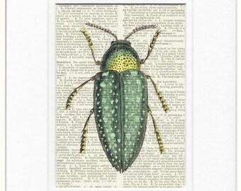 wood beetle, spotted beetle print