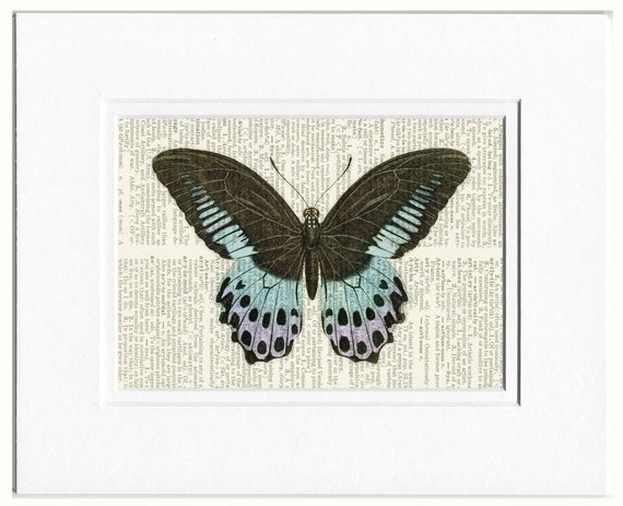 butterfly, black, blue and lavender print