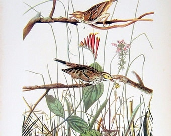 Audubon Birds - Savannah Sparrow, Hooded Warbler - 1941 2 sided Book Plate with Names and Descriptions