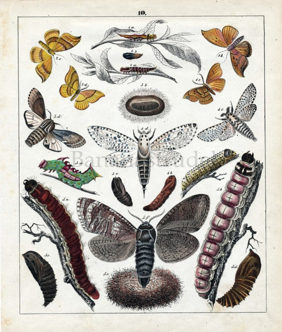 1842 Antique Print of Moths - Rare Hand Coloured Lithograph by Karl Friedrich Berge