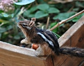 Needle Felted   Animal. Chipmunk. Made to custom order
