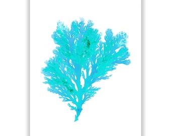Large Beach Art Seaweed Print Vibrant Teal Blue 13x19 Botanical Artwork, Ocean, Coastal Living, Beach, Wall Decor