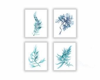 Large Set of Four, Seaweed Prints Teal Blue Botanical Artwork, Ocean, Coastal Living, Beach, Wall Decor, 11x14, Turquoise