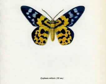 Vintage Moth Print, False Tiger Moth (81) Prochazka, 1966, Butterfly, Lepidoptera, Natural History, Frameable Art