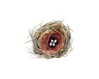 Nest Watercolor - Four eggs in a bird's nest