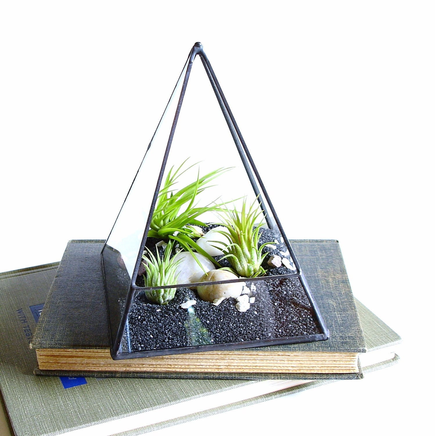 Air Plant Terrarium Glass Pyramid Terrarium Planter