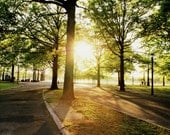 NYC Sunshine through the Trees at Flushing Meadows Park Photography Print, New York City Photo