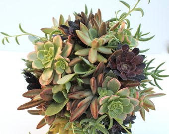 Earth Eden Succulent Bouquet