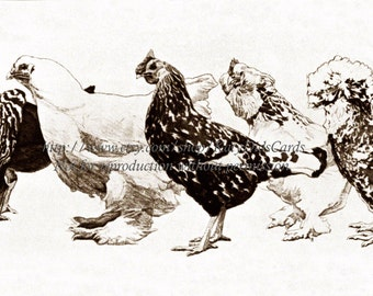 Bantam Chickens Card - Mini Chicken Group Struts In A Row