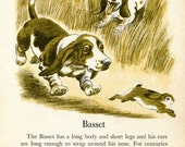 Basset Hound and Toy Manchester Terrier Illustrations by Tibor Gergely