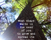 Tree Photograph with David Whyte Quote