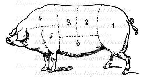 Pork Pig Cochon Butcher Meat Cut Chart Cooking Digital Image