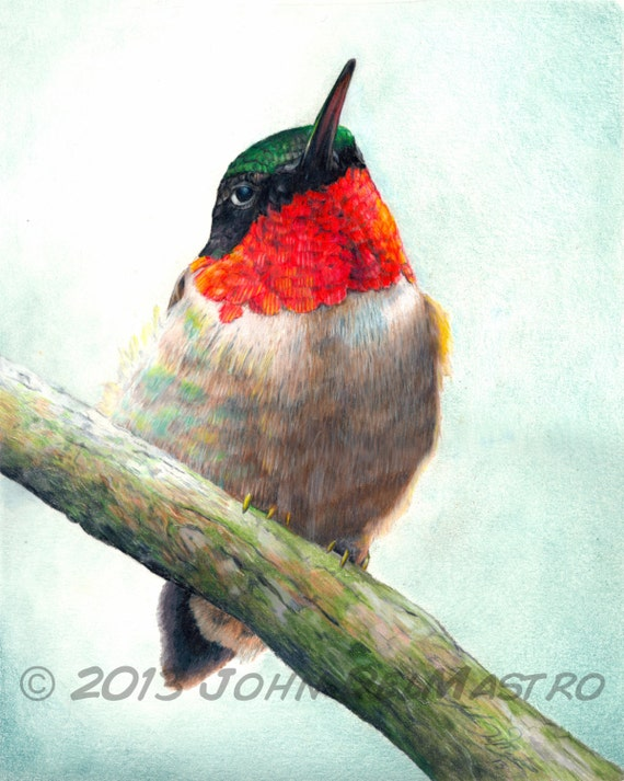 Hummingbird Drawings Step By Step: Items Similar To Color Pencil Drawing