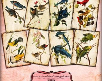 BIRD Printable Digital Collage Sheet, Vintage Ephemera Tags, Greeting Cards,Thanksgiving, Scrapbooking Supply clip art
