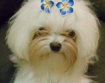 Blue Flower Dog Bows
