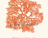 Sea fan coral red print A4 free shipping