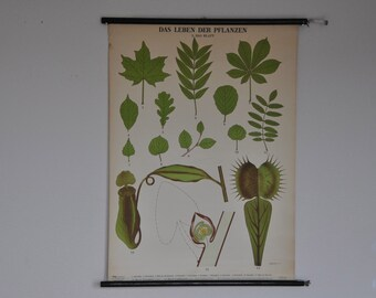 SALE Original Mid Century Botany Print. Das Leben der Pflanzen (The life of plants). Pull Down Wall Map. Germany.