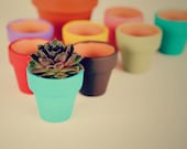 One and a Half Inch MINI Painted Terra Cotta Clay POT WITH Succulent - You Choose Color Pot and Succulent -  great gift -Chicks and hens