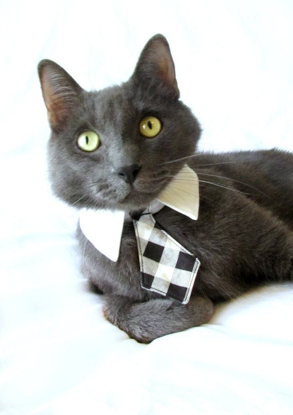 Dog Cat Black Plaid Necktie Bowtie On A Shirt Style Collar