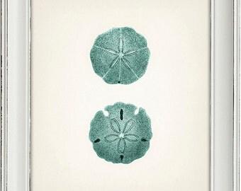 Blue sand dollar illustration - photo#3
