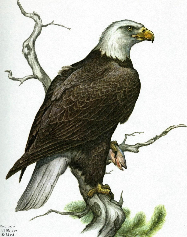 Eagle Vintage 54