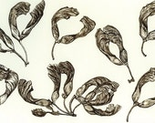 Maple pods, black walnut ink drawing, print on watercolor paper