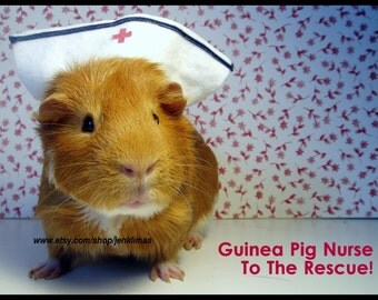 GUINEA PIG NURSE Get Well Soon 5pc Magnet Set - Five Unique Encouragement, Thinking of You Funny Photography Magnets