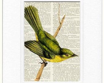 Bird Print, Yellow Tyrannulet