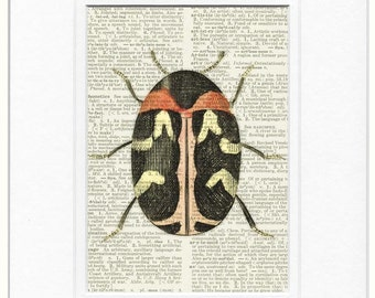 sweet carpet beetle print