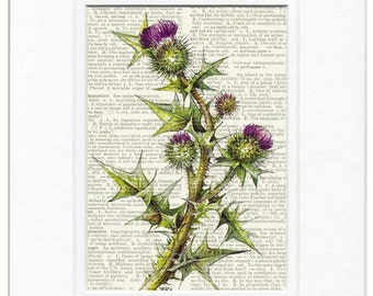 bullthistle dictionary page print