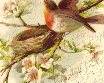 French Bird Robins, Nest, Apple Blossoms and lovely French Script, 1902 Instant Download FrA161