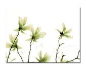 Pale Emerald Green Star Magnolia Spring Flower Minimal Botanical Photograph