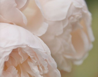 Peony Print - Paris Photography - Pink and Mint Decor - Romantic Flower Photograph French Nursery Wall Art Floral Photo Garden