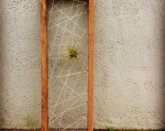 Popular items for air plant plants on etsy for Air plant wall art