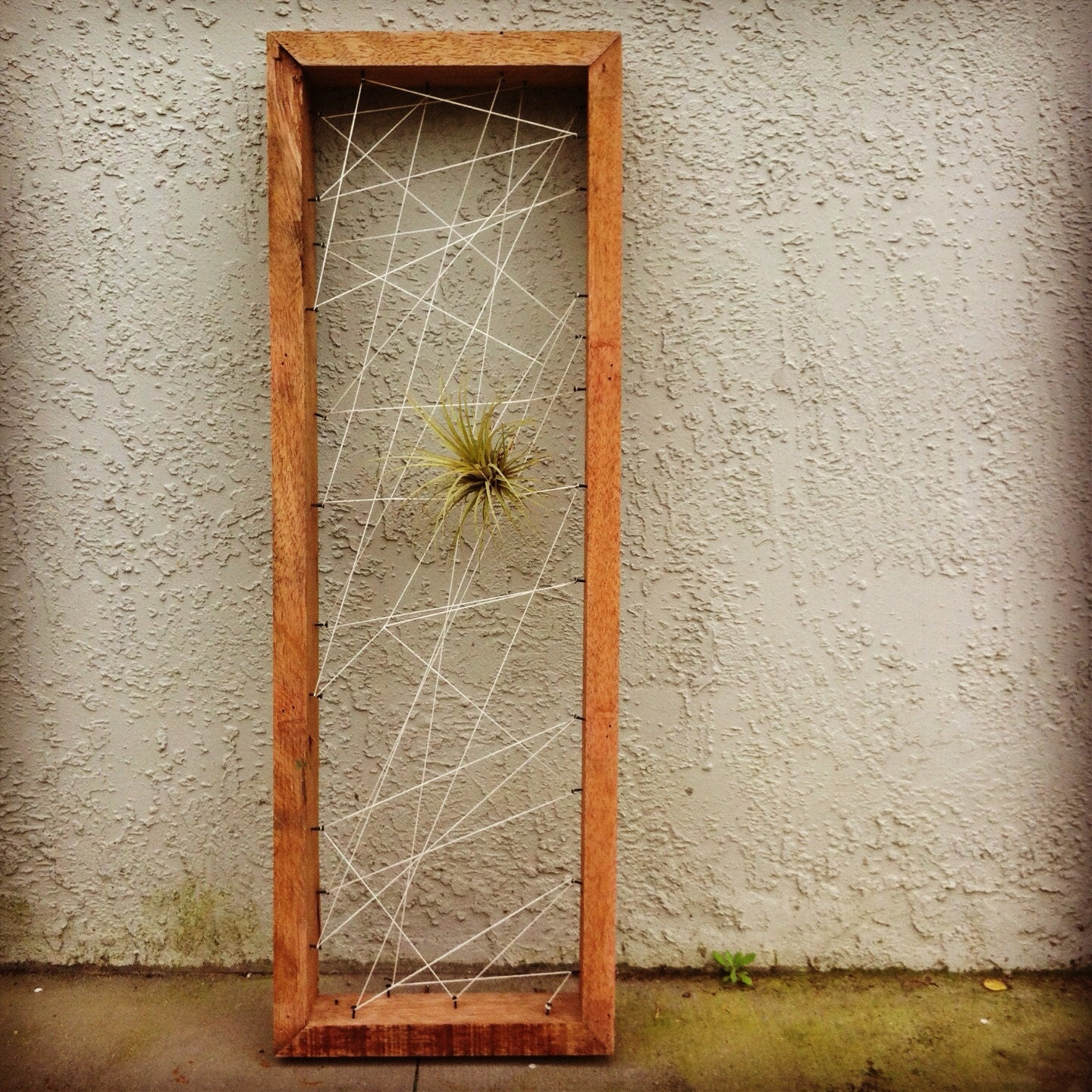 Wall art air plant personal rustic reclaimed by for Air plant art