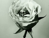 Remorse - FREE SHIPPING - Print Black White Gray Sepia Green Flower Petals Rose Skull Death Bone Still Life Surreal Creepy