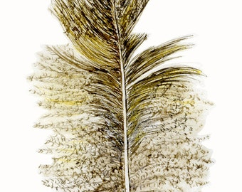 downy feather ink drawing as Digital image for personal use or work correspondence
