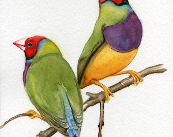 Finches 5x7 print from original watercolor painting, gouldian finches. birds, animals, wall art, art & collectibles,  earthspalette