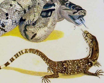 Snake Versus Lizard Serpent Herpetology Seba Natural History Lithograph Chart Poster Print To Frame