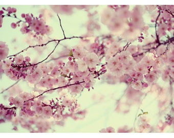 Flower Photograph - Nature Photography - Pink - Carry On - Spring - Cherry Blossom - Bloom - Fine Art Photography - Oversized Art - Flower