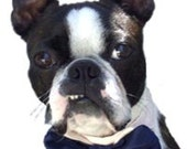 Formal Wedding Dog or Cat Bow Tie All Sizes