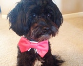 Coral or Dark Teal Satin Bow Tie for your Yorkie Chihuahua Poodle ShihTzu Pomeranian