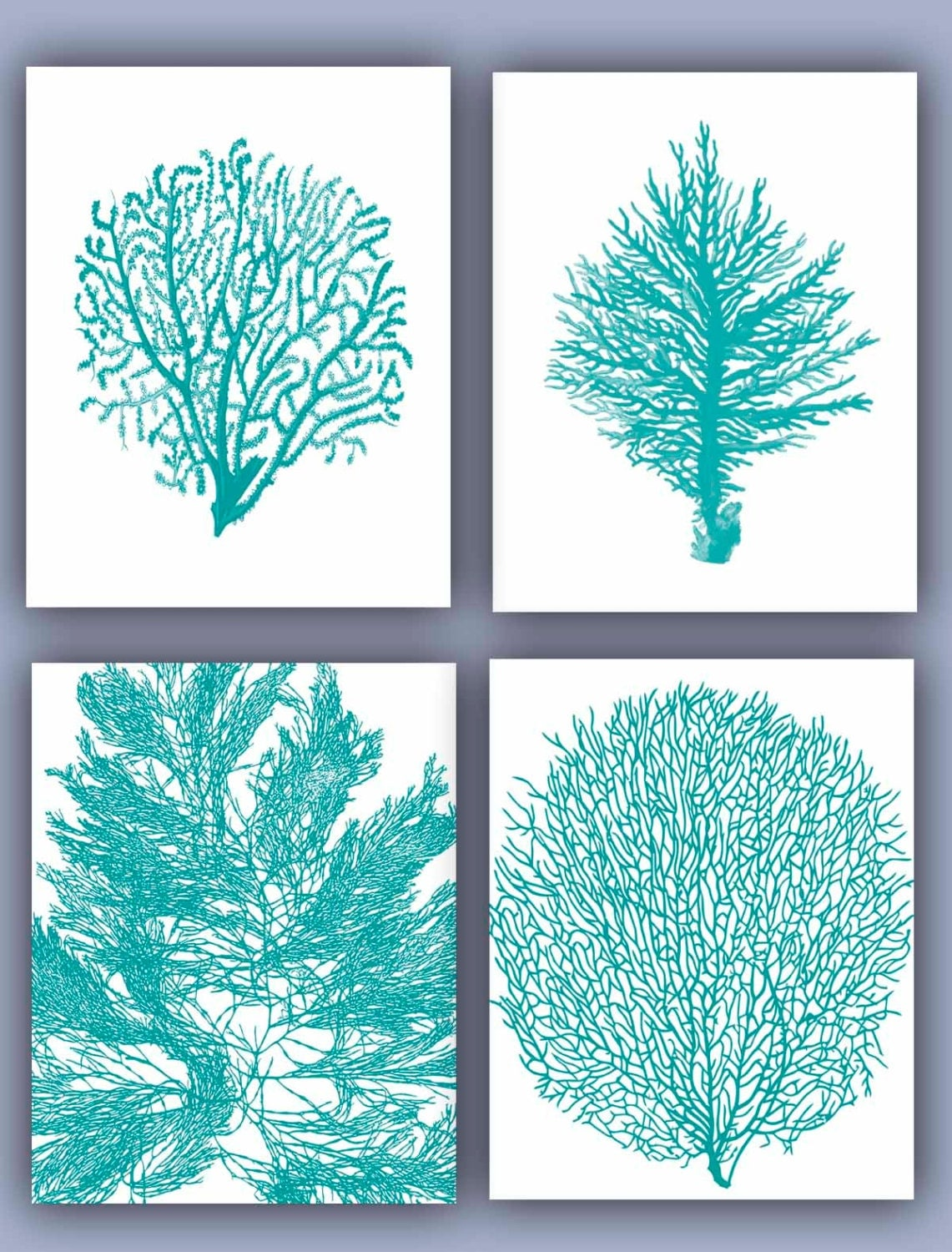 Sea Fan Collection Prints Set Of 4 11x14 Seafan Coral By